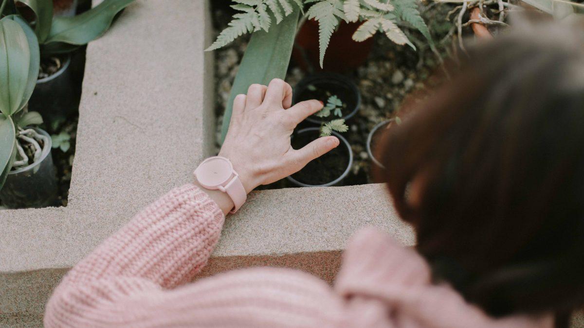 Şimdi Evler Daha Yeşil: Evde Organik Tarım