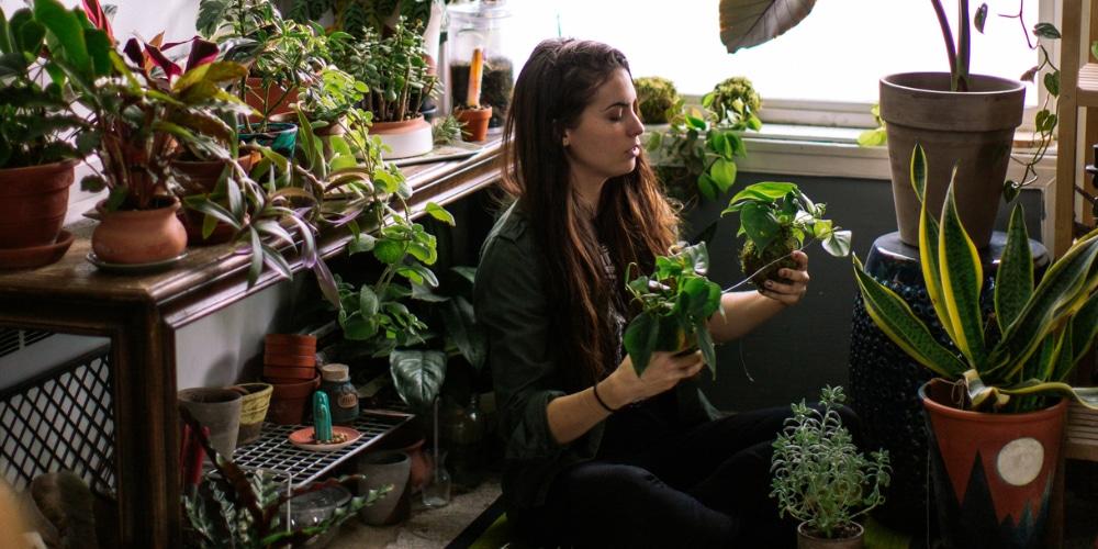 Bitkinin Canlanması İçin Ne Yapmalı